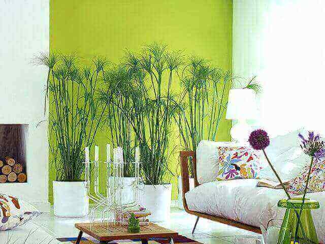 pilihan warna cat interior rumah minimalis