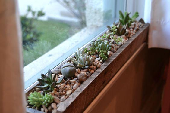 dekorasi ruang dengan tanaman, penempatan tanaman dekat jendela