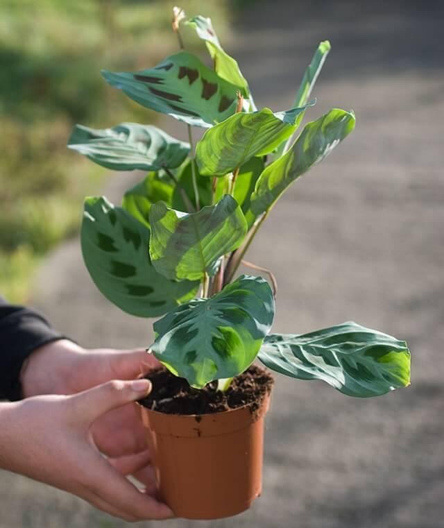 tanaman hias untuk taman kecil