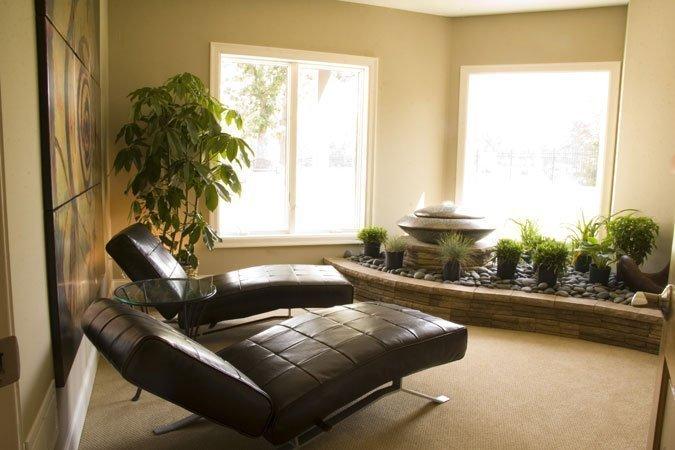 Tanaman indoor zen