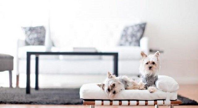 furniture hewan peliharaan