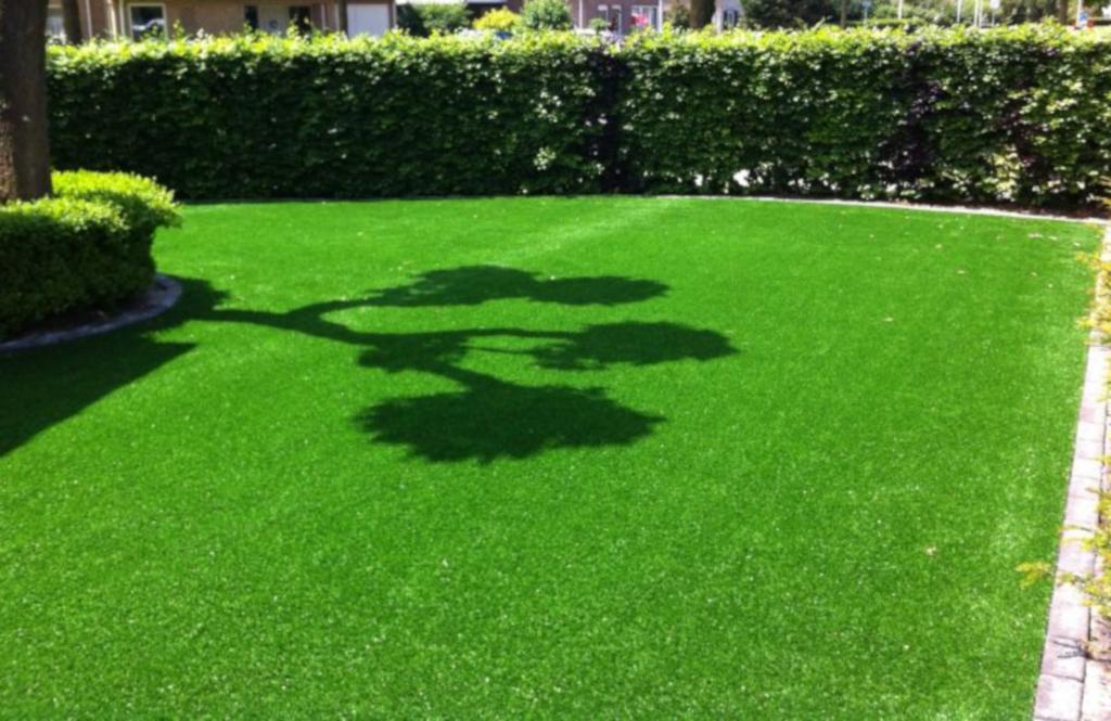 rumput peking untuk taman rumah