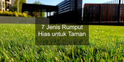 jenis rumput hias untuk taman