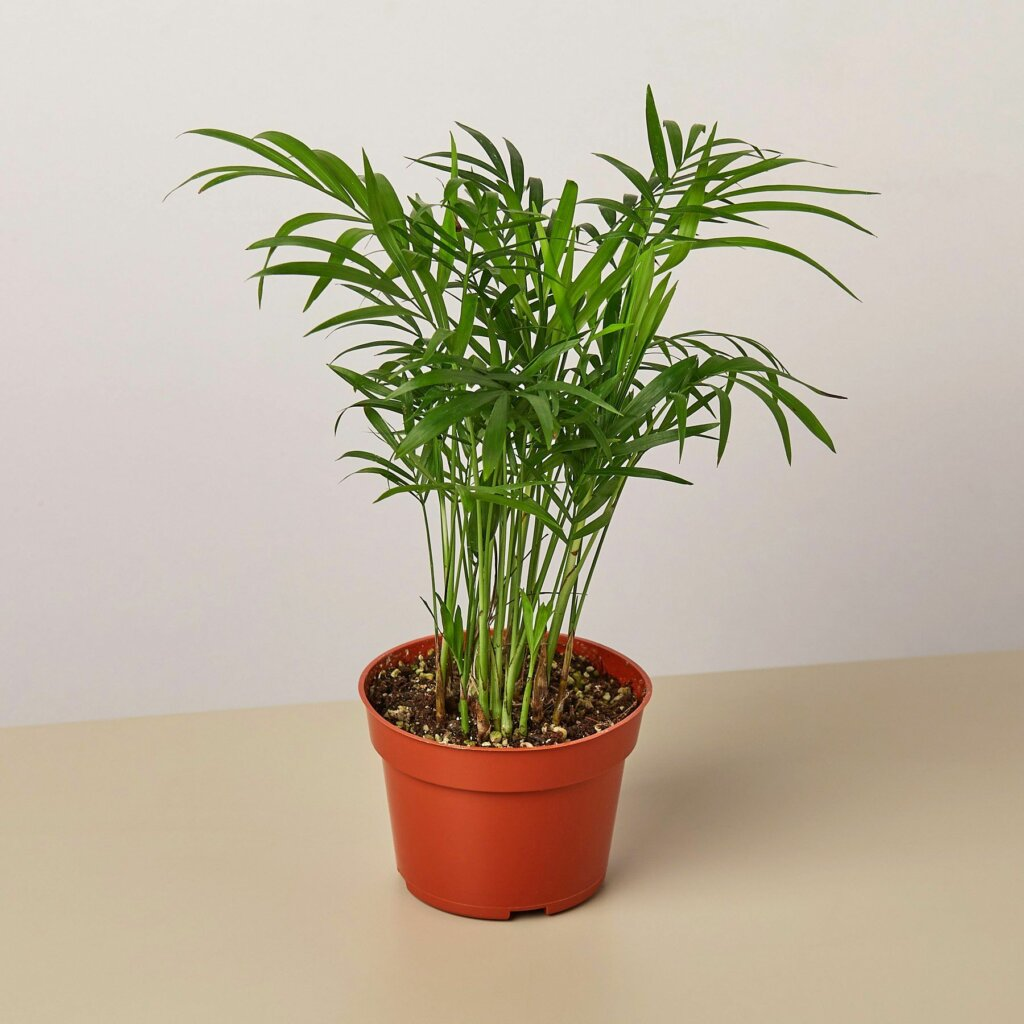 tanaman sesuai zodiak taurus